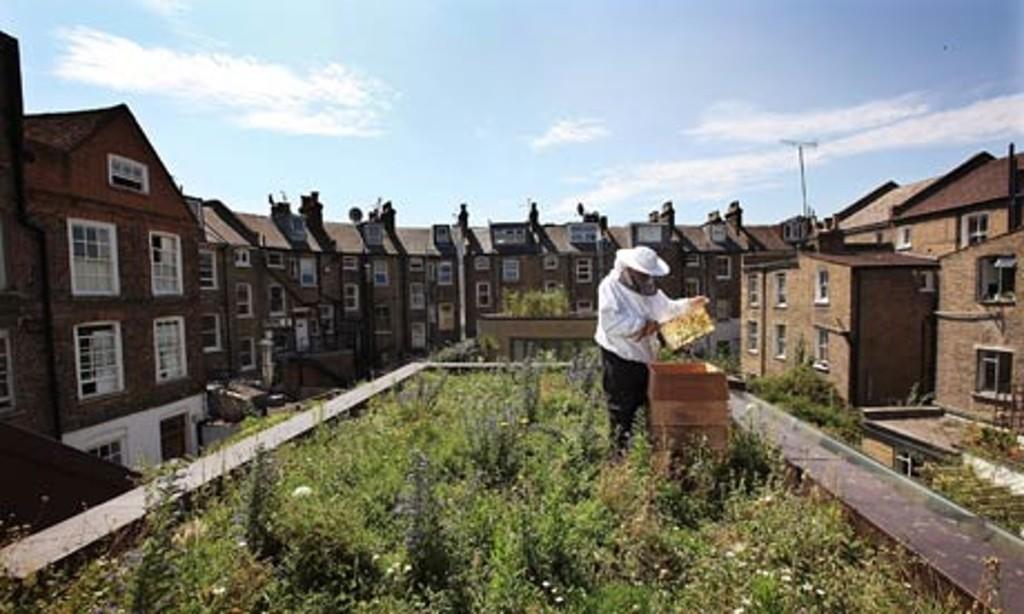 Urban-Beekeeping